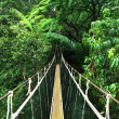 Stock Photo: Rope bridge in jungle