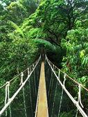 Puente de cuerda en la selva — Foto de Stock