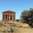 Greek temple with olive tree - ストック写真