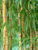 Bamboo garden — Stock Photo