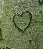 Coração esculpida na árvore — Fotografia Stock