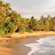 Stock Photo: Tropical shoreline