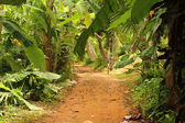 Jungle path — Stock Photo