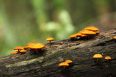 Colorful forest mushrooms — Stock Photo