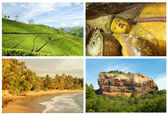 Sri lanka tourism — Stockfoto