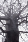 Spooky tree branches — Stock Photo