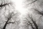 Winter treetops — Stock Photo
