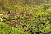деревня плантации чая — Стоковое фото