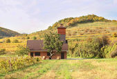 House in autumn vineyards — Stock Photo