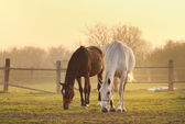 Two horses on ranch — Stock Photo