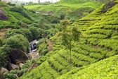 Tea plantation with waterfall — Stock fotografie