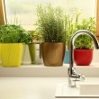 Herbs growing in kitchen — Stock Photo #44556089