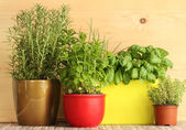Kitchen herb garden — Stock Photo