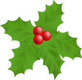 Plant Holly — Stock Vector