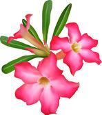 Exotic Flower — Stock Vector