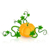 Pumpkin. Vector Vllustration — Vecteur