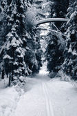 Ski track in the winter wood — Stock Photo