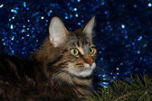 Cat on a New Year — Stock Photo