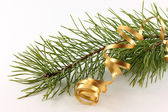 Branch of a pine and serpentine — Stock Photo