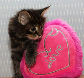 Kitten with heart — Stock Photo