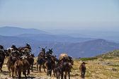 Cabras en las montañas — Foto de Stock