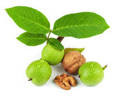 The fruit of green and mature walnut — Stock Photo