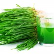 Wheatgrass juice with sprouted wheat - Stock Photo