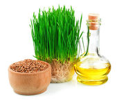 Wheat sprouts, wheat seeds in the wooden bowl and wheat germ oil — Stock Photo