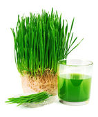 Wheatgrass juice with sprouted wheat on the plate — Stock Photo