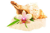 Seashell, bamboo and orchid on the sand — Stock Photo