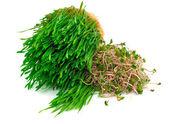 Wheat germ and radish germ — Stock Photo
