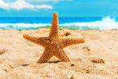 Starfish in the sand at the beach — Stock Photo