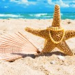 Starfish with beads from pearls and fan — Stock Photo