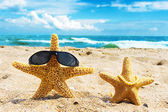 Two starfish at the beach — Stock Photo