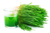 Wheatgrass juice with sprouted wheat — Stock Photo