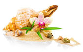 Spa concept with seashell and orchid — Stock Photo