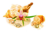 Shells on sand with orchid and bamboo — Stock Photo