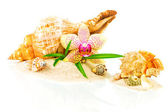 Spa concept with seashells, bamboo and orchid — Stock Photo
