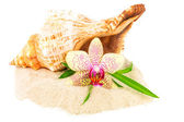 Shells on sand with flower and bamboo — Stock Photo