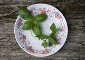 Basil and mint — Stock Photo