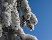 Tree in winter — Stock Photo