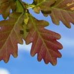 Autumn leafs — Stock Photo #33249979