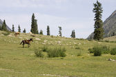 Horse running in mountains — Stock Photo