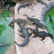 Hungry crocodiles — Stock Photo #15456913