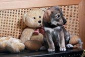 Filhote de cachorro pequeno com um ursinho de pelúcia — Fotografia Stock