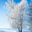 Trees in rime — Stock Photo