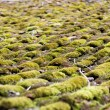Moss - grown roof Abstract Background — Stock Photo