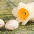 Basket with easter eggs and daffodil — Stock Photo