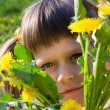 Little girl peeps out through bunch of dandelions — Stock Photo
