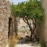 Flowering green tree growing on narrow street between stone wall — Stock Photo #15341311